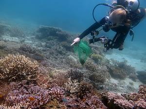 Diver spotting a COT