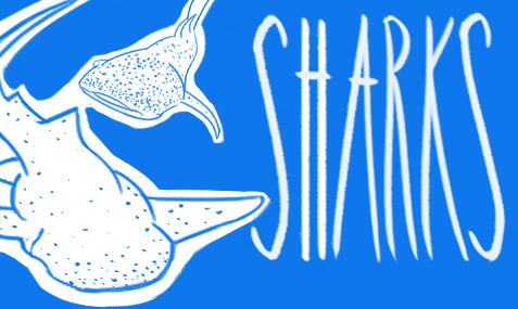 shark-education-conservation