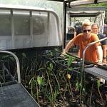 Mangrove seedlings in MCP truck