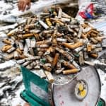 Massive amounts of cigarette butts very collected
